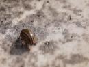 Колорадский жук уполз MAH01447