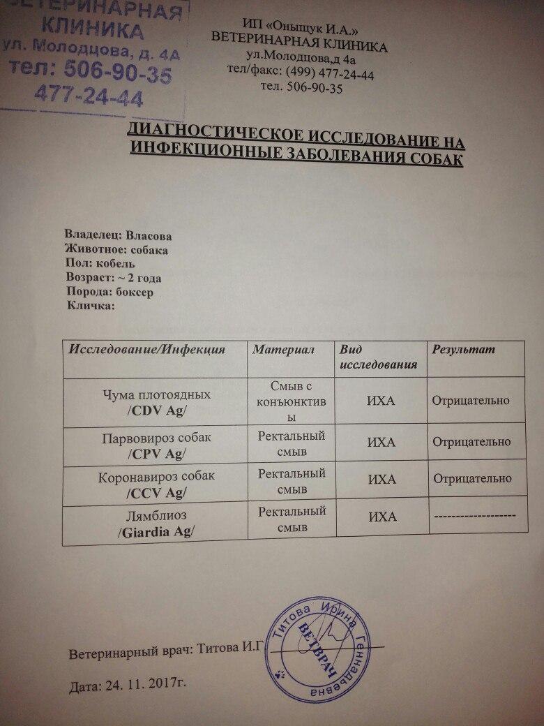 Москва, Найт,  кобель, 24 ноября 2015 4Ff2Tvw39ZE