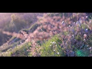 videoportret/N