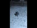Собачья радость безгранична