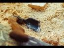 Рубят Срубы - Ладно да Складно