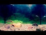 Атака Щуки, Подводные съемки в аквариуме