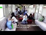 В Японии запустили поезд с котами