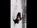 Пришла зима, собаки счастливы!