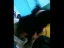 Студентка засветила грудь вписка цп дп цпвлс cp wg cpvls малолетка детское подростки школьница сестру