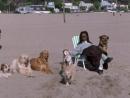 Х/Ф Кости и собаки (2000г)