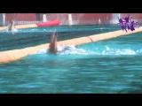 Ролик 6-го этапа открытого Всероссийского турнира по плаванию Кубок золотого кольца в ВДЦ Смена
