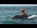Дельфин и собака...Настоящая дружба!