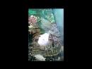 Жизнь обитателей аквариума в магазине 12 Месяцев Витебск р-н Билево