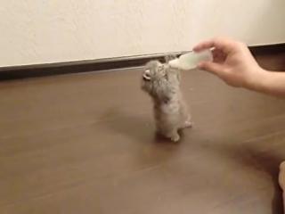 Котик пытается поужинать
