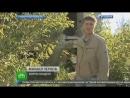 НТВ-репортаж Самарские живодерки