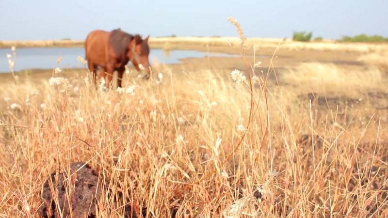 Конный маршрут - Арамбольское плато (Гоа, Индия)