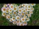 Фото-клип Сердце земли моей Исполнители песни И. Дорофеева и Р. Алехно, Автор и дизайнер фото-клипа О. Киселёва