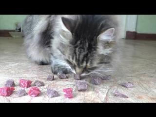 Сырая или варенная говядина - что предпочтет есть кот? (VHS Video)