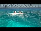 Плавание с дельфинами 2017
