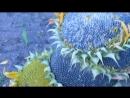 урожай подсолнечника в Лахте