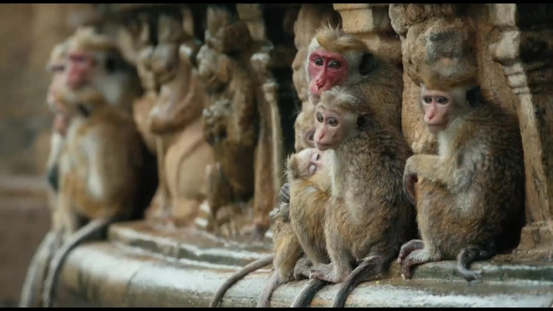 Трейлер. Королевство обезьян