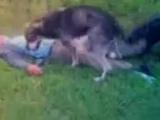 Собака трахает акаша!