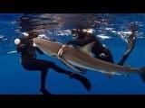 Раненая акула попросила помощи у людей. Дайверы спасли акулу - Трогательно