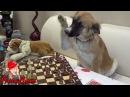 Анекдот Шах и Мат Очень смешной анекдот про животных до слез