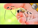 УКУСИТ ЛИ!? - ОГРОМНЫЙ КРУГОПРЯД.Ядовитый паук с самой большой паутиной.Brave Wilderness на русском