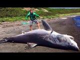 Океанские монстры убивают акул - Загадки человечества - (30.08.2017)