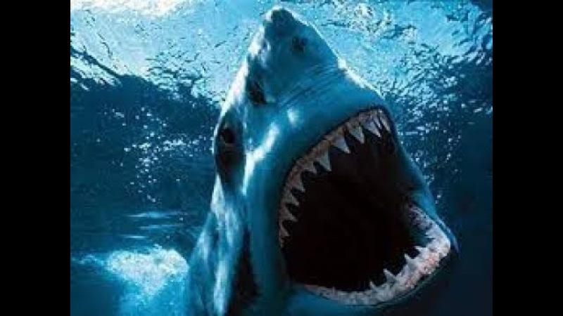 Animal Planet Акулы Людоеды Нападения на людей Документальный фильм
