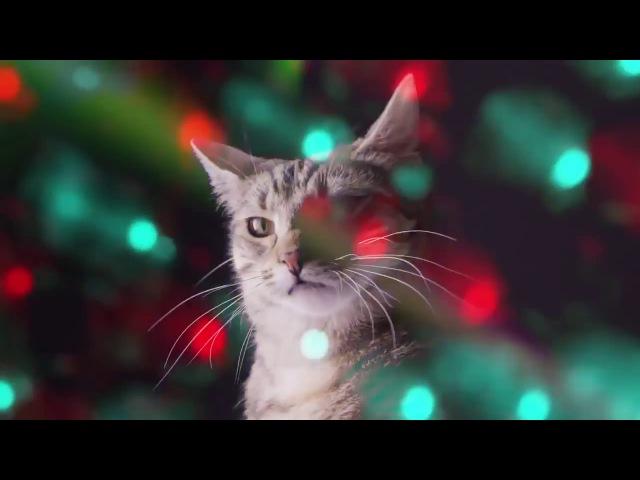 Веселая музыка котов :)
