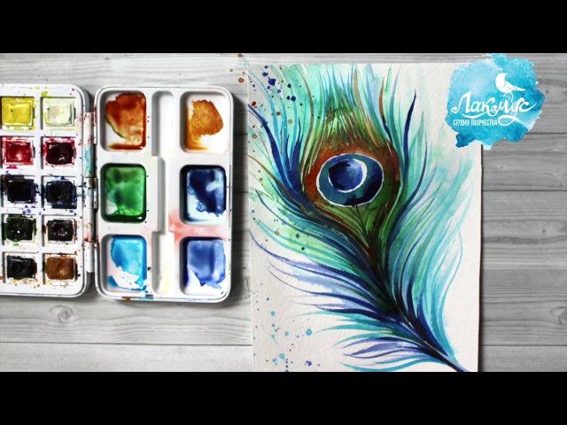 Как нарисовать перо павлина акварелью. 365 арт дней. День 5