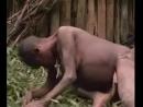 Как рожают в новой Гвинее