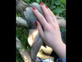 """"""" Наш оленёнок, кенгуренок. Наш Чессик❤️Сегодня к нему ездила навещать наша Настюша @nastishka89 😘Спасибо тебе дорогая! А мы уже"""