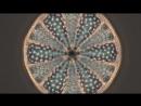 BEAUTIFUL DIATOMS by DIATOM SHOP HD
