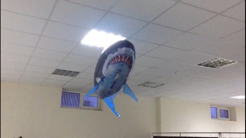 Обворожительная акула Анжела 🐟