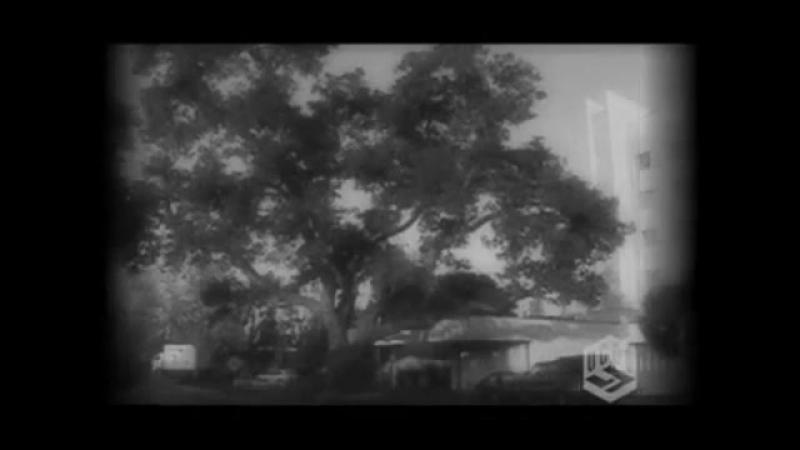 1-3. Угол ТВ -- Откровенно о браке ( 360 X 480 ).mp4