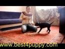 Как приучить щенка к лотку или к пеленке Приучение щенка к туалету (дома)