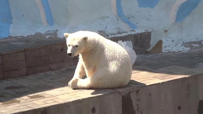 Белая медведица Герда и её малыш. Новосибирский зоопарк 05 » Freewka.com - Смотреть онлайн в хорощем качестве