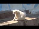 Белая медведица Герда и её малыш. Новосибирский зоопарк 05