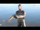 Подводная охота на трофейную щуку зимой часть №2