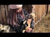 Приют для животных «Возрождение»