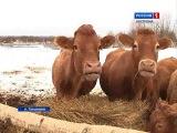 Жители поселка Татьянино в Костромской области уже второй месяц терпят набеги б...
