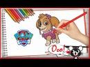 Щенячий патруль раскраска СКАЙ Видео для детей