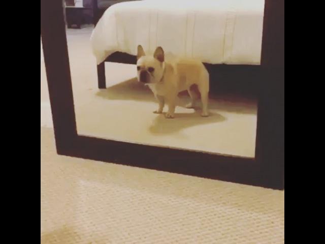 Mari_burlak video