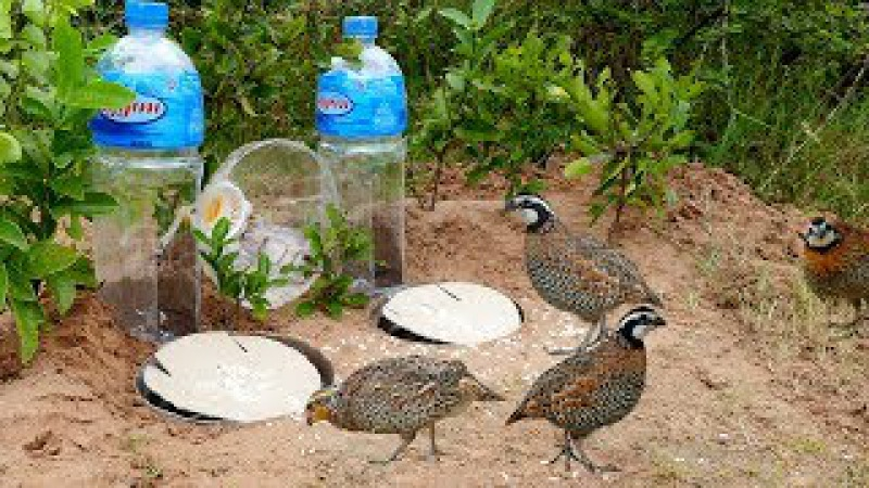 Super Creative Deep Hole Bird Trap Using Big Bottle 5L - How to make easy bird trap work 100%