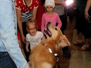Собаки глаза и собаки таблетки помогают новосибирцам