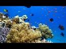 Самый красивый подводный мир - в Красном море.