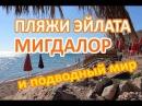 Пляжи Эйлата. Пляж Мигдалор в январе. Подводный мир Красного моря