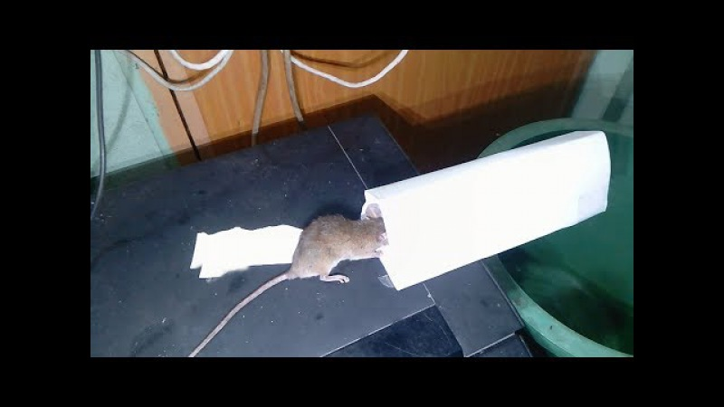 Paper Mouse/Rat Trap using Bucket,paper and water - How To Make Bucket Mouse Trap