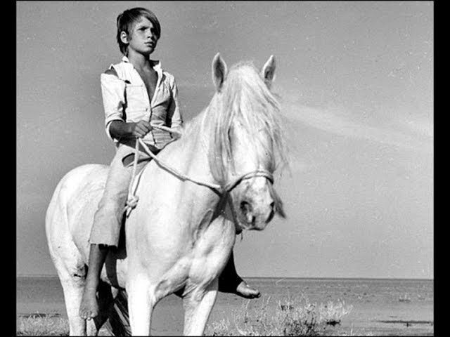 Белогривый (Crin blanc: Le cheval sauvage)