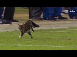 How Did a Cat Get on the Field? Dolphins vs. Ravens