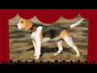 Мультик для Детей про Собак. Развивающий Мультфильм о Домашних Животных для Малышей. Видео для Детей